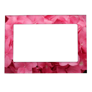 Pink hydrngea flowers picture frame magnet