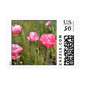 Pink Iceland Poppies Postage