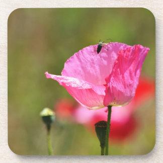 Pink Iceland Poppy Beverage Coaster