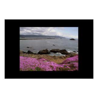 Pink iceplant and Bay Poster