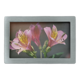 Pink Inca Lily flowers and meaning Rectangular Belt Buckle