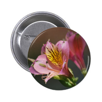 Pink Inca Lily flowers and meaning Button