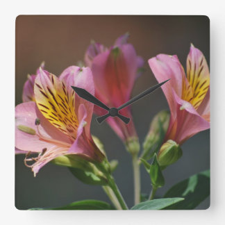 Pink Inca Lily flowers and meaning Square Wall Clock