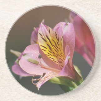 Pink Inca Lily flowers and meaning Drink Coaster