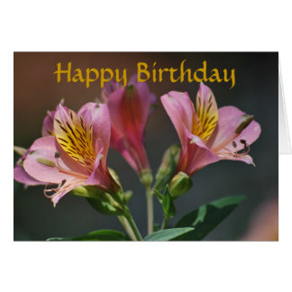 Pink Inca Lily flowers and meaning Greeting Card