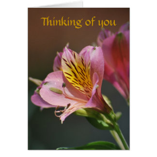 Pink Inca Lily flowers and meaning Greeting Cards
