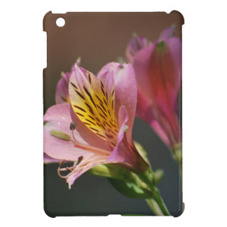 Pink Inca Lily flowers and meaning Cover For The iPad Mini