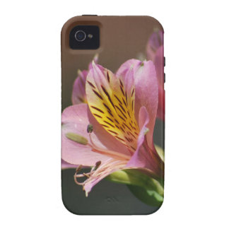 Pink Inca Lily flowers and meaning iPhone 4 Covers