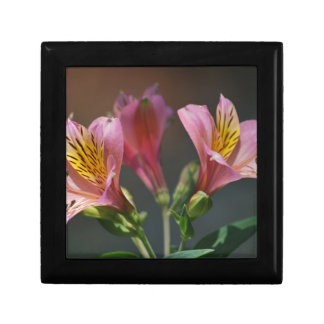 Pink Inca Lily flowers and meaning Jewelry Boxes