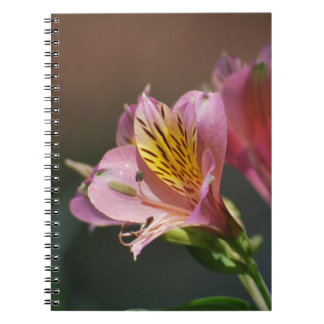 Pink Inca Lily flowers and meaning Journal
