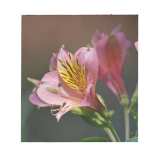 Pink Inca Lily flowers and meaning Memo Notepad