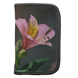 Pink Inca Lily flowers and meaning Organizers
