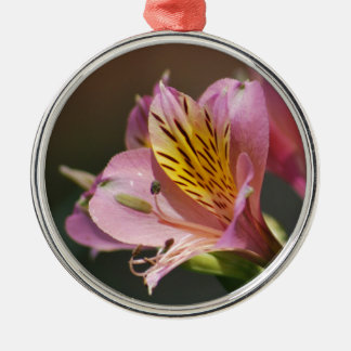Pink Inca Lily flowers and meaning Christmas Tree Ornaments