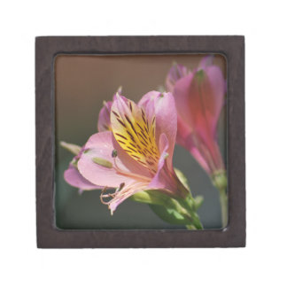 Pink Inca Lily flowers and meaning Premium Trinket Box
