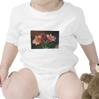 Pink Inca Lily flowers and meaning Shirt