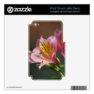 Pink Inca Lily flowers and meaning iPod Touch 4G Skins