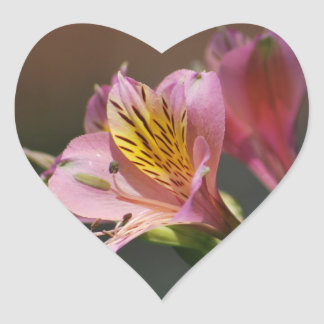 Pink Inca Lily flowers and meaning Sticker