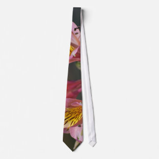 Pink Inca Lily flowers and meaning Tie