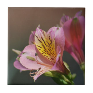 Pink Inca Lily flowers and meaning Tile