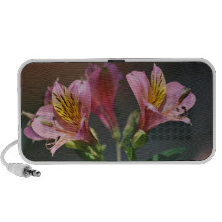 Pink Inca Lily flowers and meaning Travel Speaker