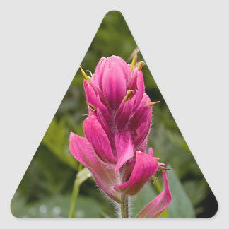 Pink Indian Paintbrush Triangle Sticker