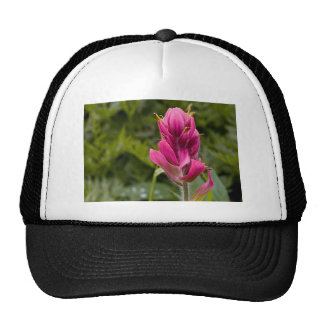 Pink Indian Paintbrush Trucker Hat