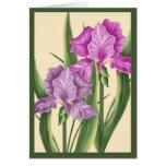 Pink Iris Greeting Card