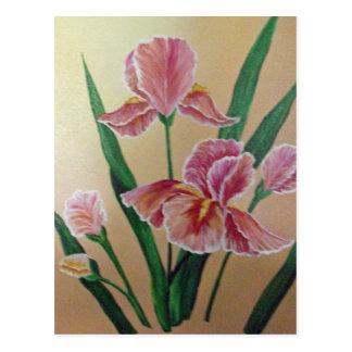 Pink Iris Postcard
