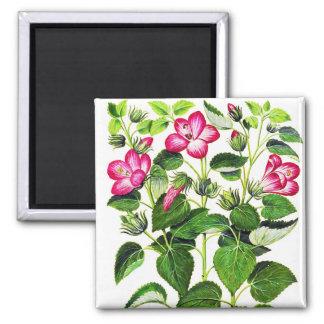 Pink Italian Hibiscus flowers, vintage print Magnet