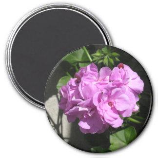 Pink Ivy Geranium 3 Inch Round Magnet
