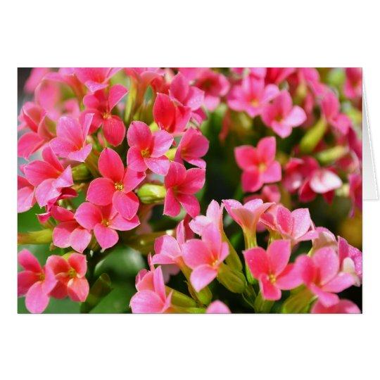 Pink Kalanchoes Card
