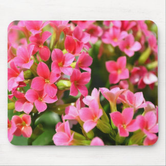 Pink Kalanchoes Mouse Pad