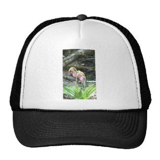 Pink Lady slipper orchid Trucker Hat