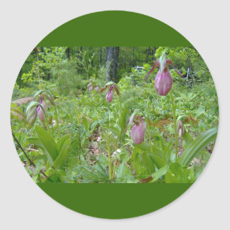 Pink Lady Slippers - Wells Maine - photo by Wendy Classic Round Sticker