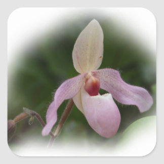 Pink Lady's Slipper Orchid Square Sticker