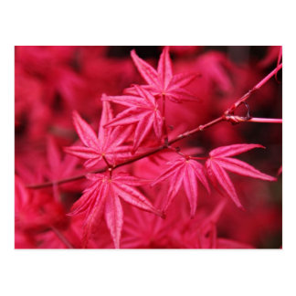 Pink Leaves Postcard