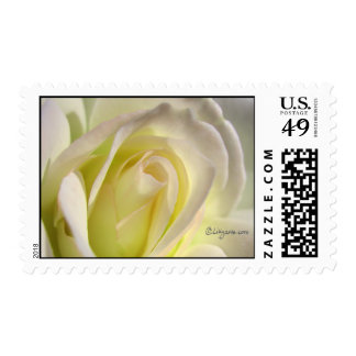 Pink Lemonade Rose Wedding Postage