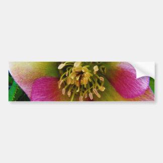 Pink Lenten Rose, Bumper Stickers