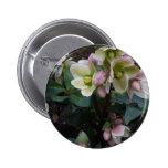 Pink Lenten Rose button pin
