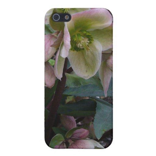Pink Lenten Rose iPhone 5 Covers
