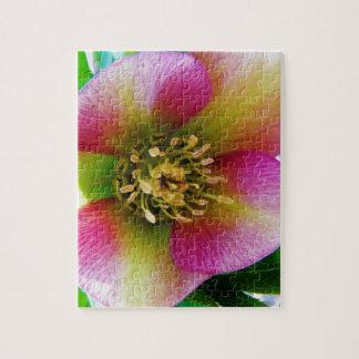 Pink Lenten Rose, Puzzle