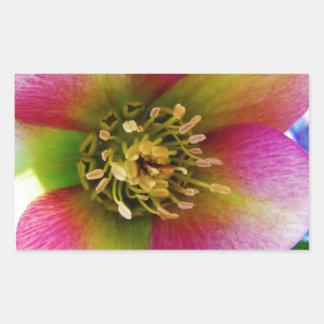 Pink Lenten Rose, Sticker
