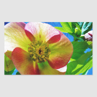 Pink Lenten Rose Rectangular Sticker