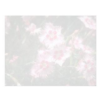 Pink Light Pink, (Dianthus Plumarus) flowers Letterhead