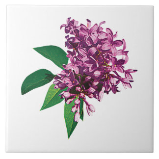 Pink Lilac Clusters Tile