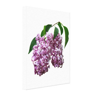 Pink Lilac Duo Canvas Print