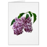 Pink Lilac Duo Greeting Card