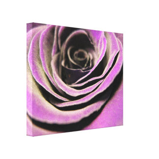 Pink Lilac Rose Gallery Wrap Canvas