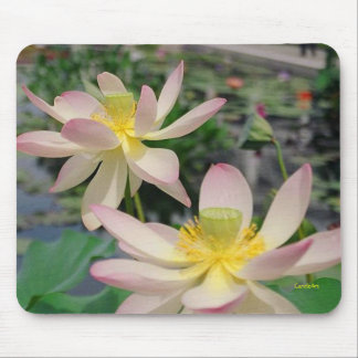 Pink Lilies Mousepad