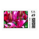 Pink Lilies Postage